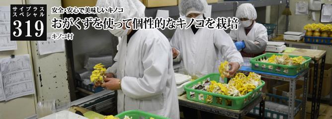 [サイプラススペシャル]319 安全・安心で美味しいキノコ おがくずを使って個性的なキノコを栽培