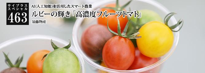 [サイプラススペシャル]463 ルビーの輝き「高濃度フルーツトマト」 AI(人工知能)を活用したスマート農業